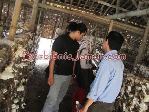 Kunjungan ke petani jamur