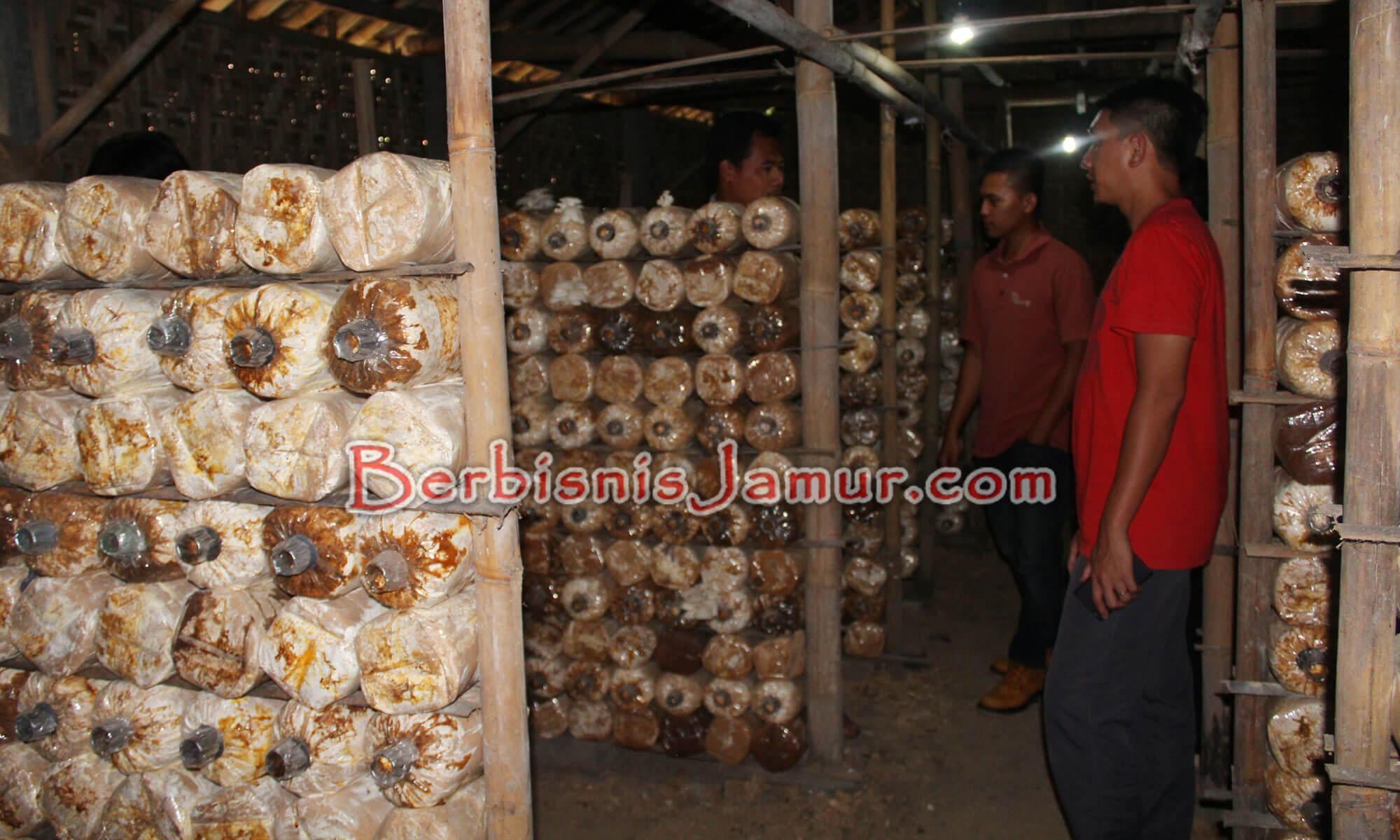Kunjungan peserta ke petani jamur