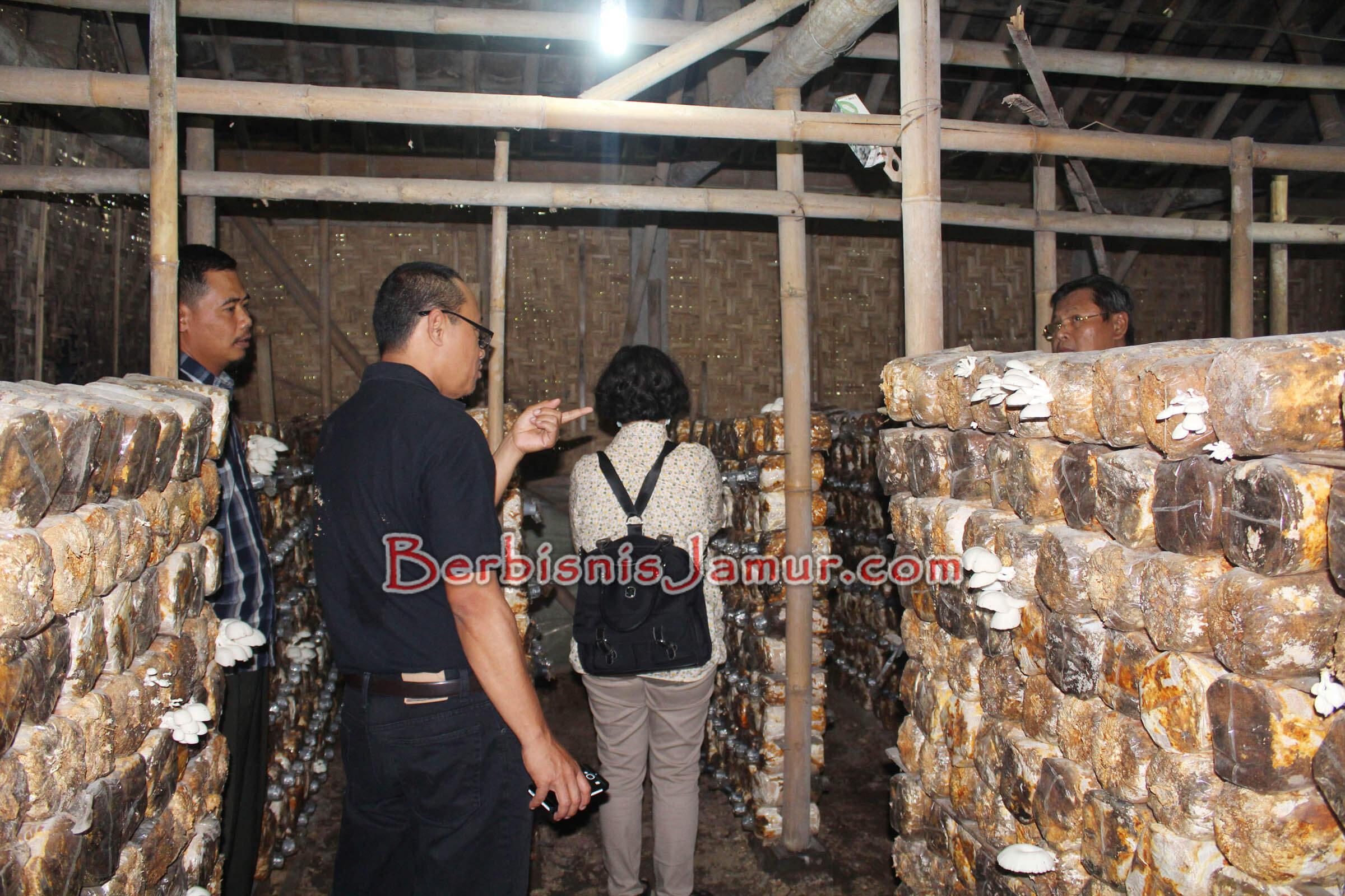 Kunjungan ke Kumbung Jamur