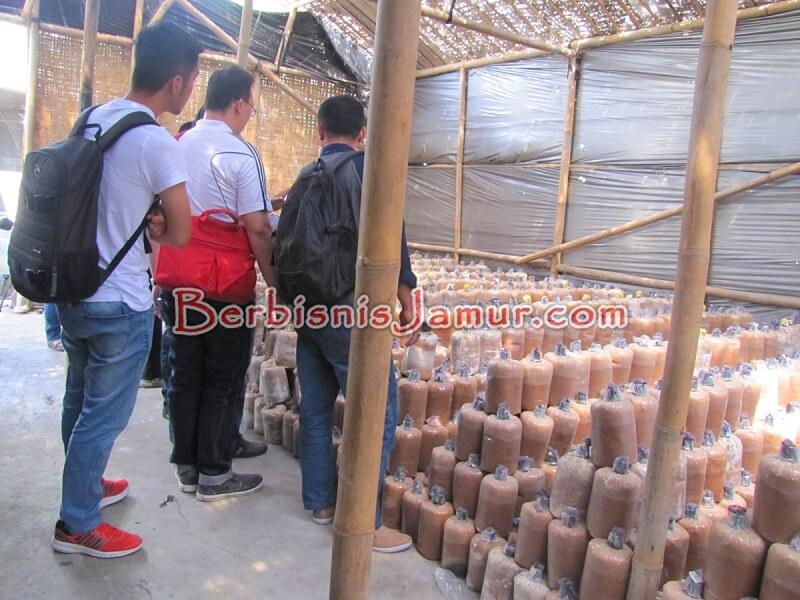Kunjungan ke Kumbung Jamur Shitake