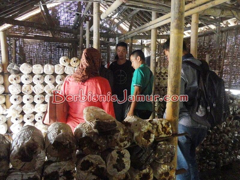 Kunjungan ke kumbung Jamur Tiram