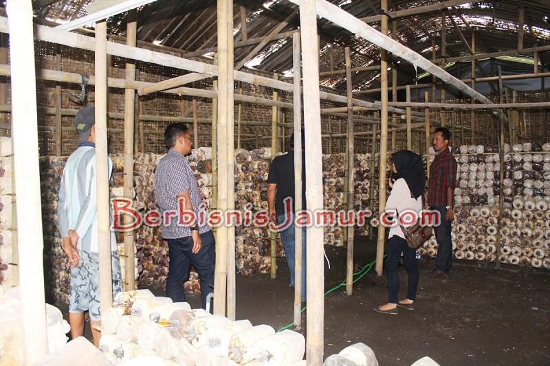 Berkunjung ke Kumbung Jamur Untuk Melihat Penataan Baglog
