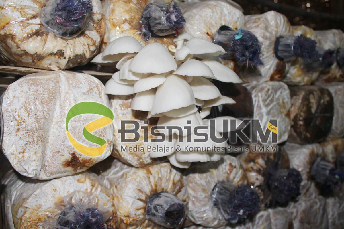 Perawatan jamur tiram