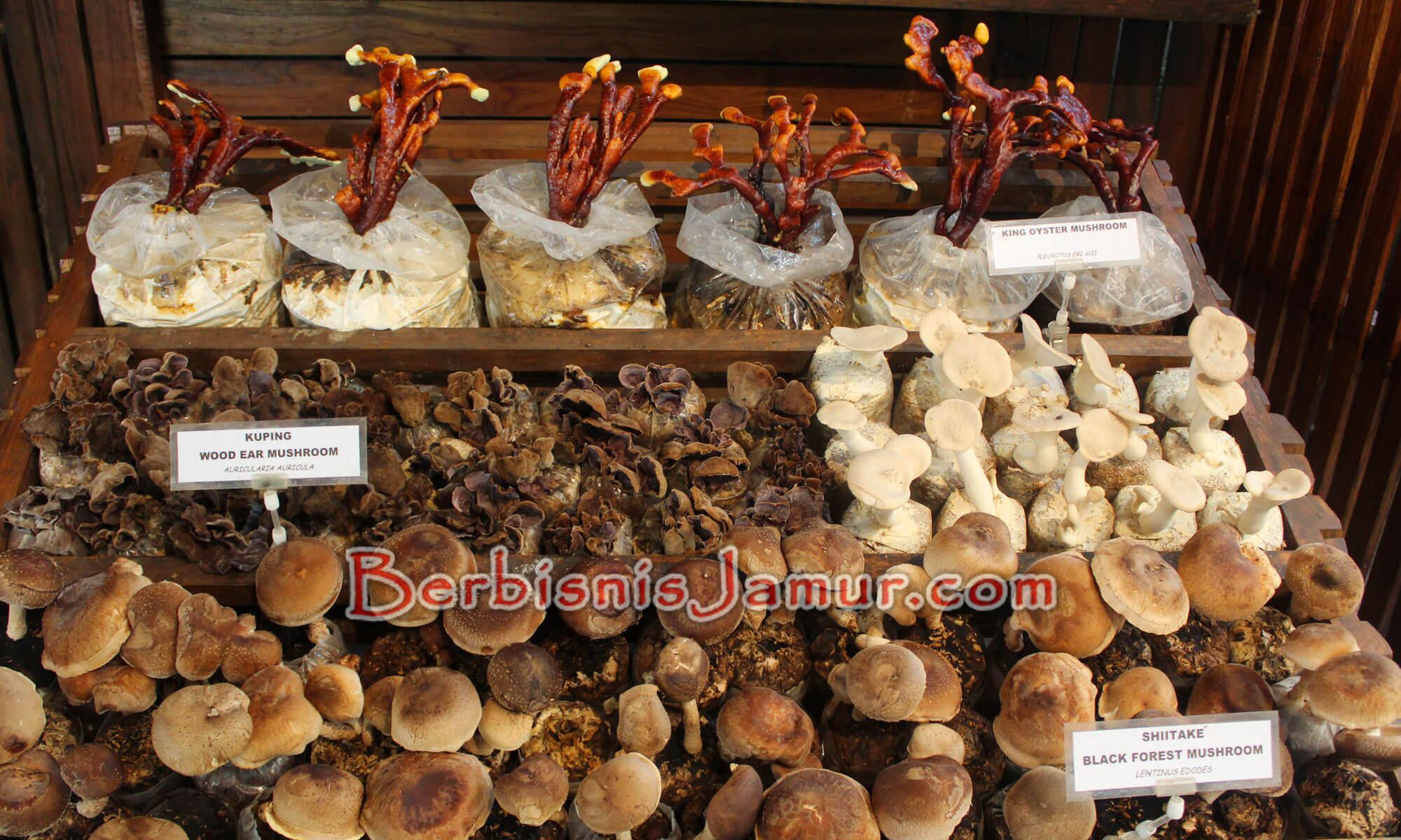 Aneka jenis jamur konsumsi