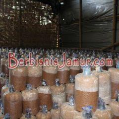 Proses Inkubasi Baglog Jamur